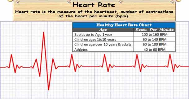 Heart Rate What Factors Determine your Heart Rate? - rate chart