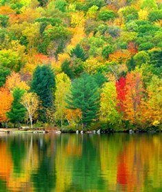 Fall Leaves Fox Wallpaper New Hampshire Is The Place To Be For A Perfect Fall