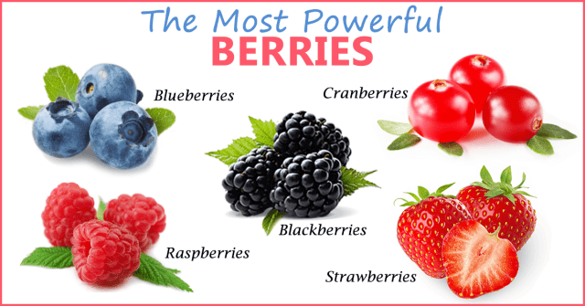berries_for_the_brain