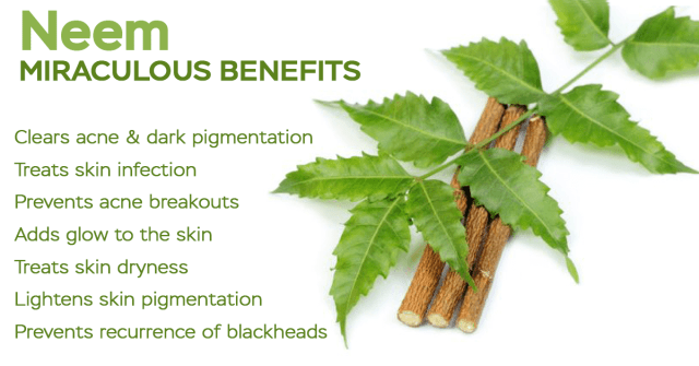 neem plant benefits
