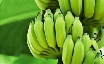 green bananas for health