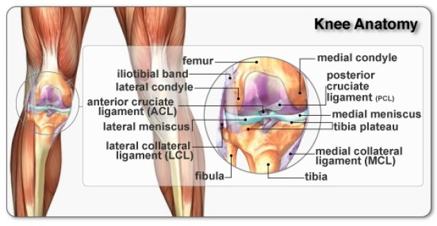 knee anatomy and how to get rid of knee pain