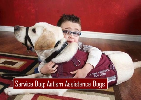 Autism Assistance Dogs HealthyLife WeRIndia