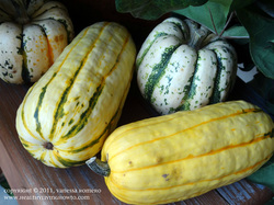 How to chose Delicata squash
