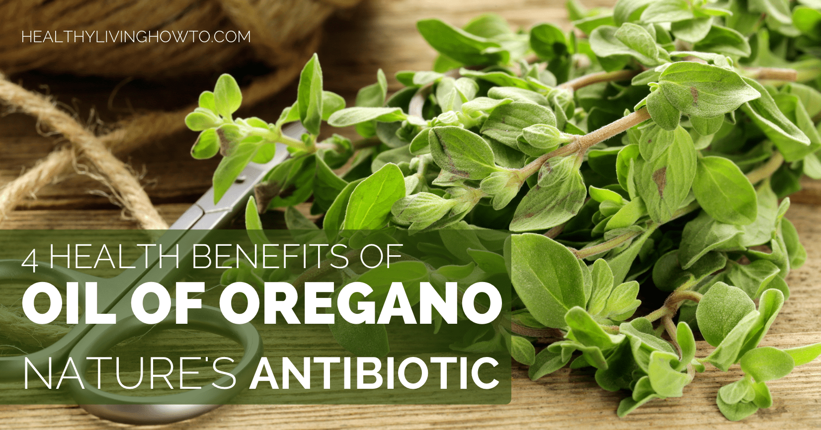 the nature and uses of oregano Learn how wild oregano oil rich in a natural antibiotic carvacrol is becoming a  natural remedy for many conditions from naturesupplies.