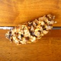 Pine Cone Bird Feeder and Raw Snack