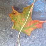 Geometry in Nature- Halves and Midlines