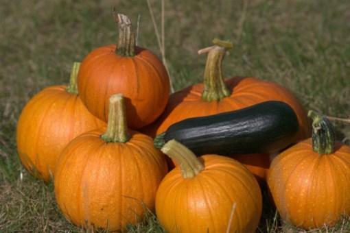 Pumpkins - Kare Hvlid