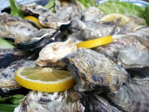 Maldon Oysters - Farrukh