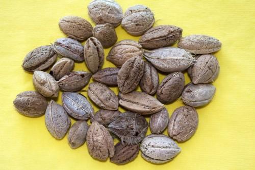 7.Sea Beans