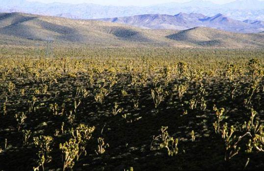 Mojave Desert in Nevada