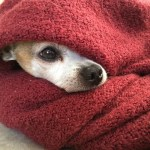 How to Care for Dogs in Cold Weather