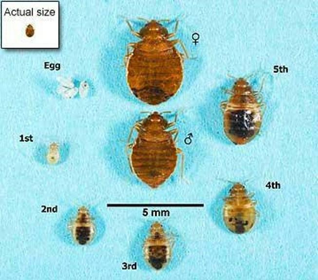 Bed Bugs \u2013 Heartland Pest Control Inc