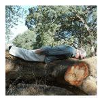 Planken oder nicht planken – das ist hier dieFrage