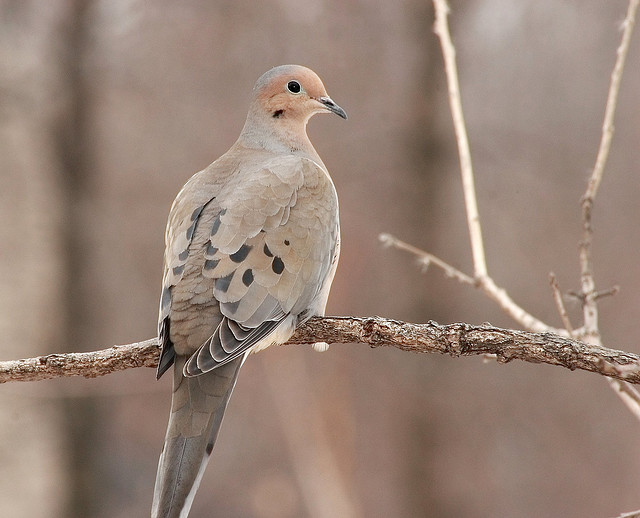 The Difference Between A Dove And A Crow Hebrew Language
