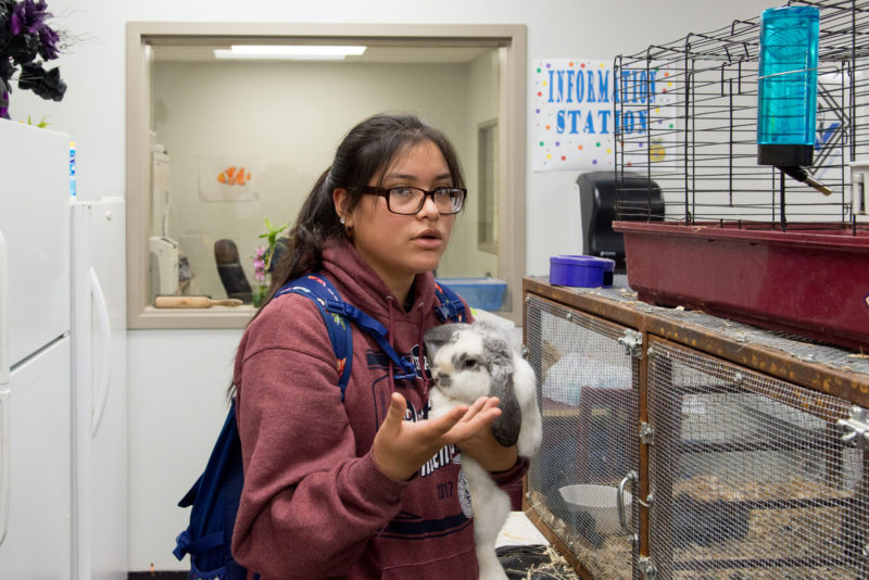 Bibiana Perez, a 16-year-old junior at Webster High School, takes classes in the school's agriculture department.