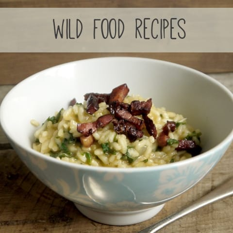 A tasty collection of wild food recipes - The Hedgecombers