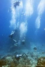 dive inn ko phangan scuba diving