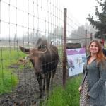 Jeanne Alaska Moose