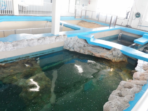 Clearwater Marine Aquarium turtle tanks