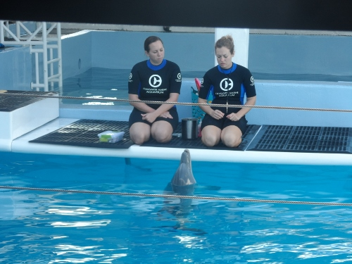 Clearwater Marine Aquarium dolphin training