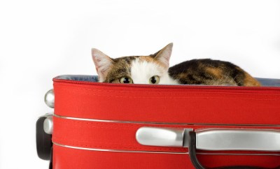Cat in Suitcase Packing Luggage