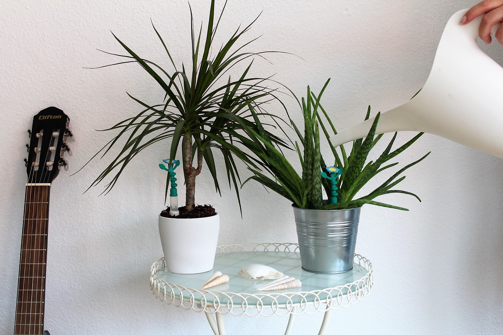 Pflanze Badezimmer Luftfeuchtigkeit | Pflanzen Im Badezimmer Tipps ...