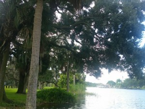 #10 - The peaceful view of the Hillsborough river, a place that brings peace to our busy souls... - RATING: 3.00