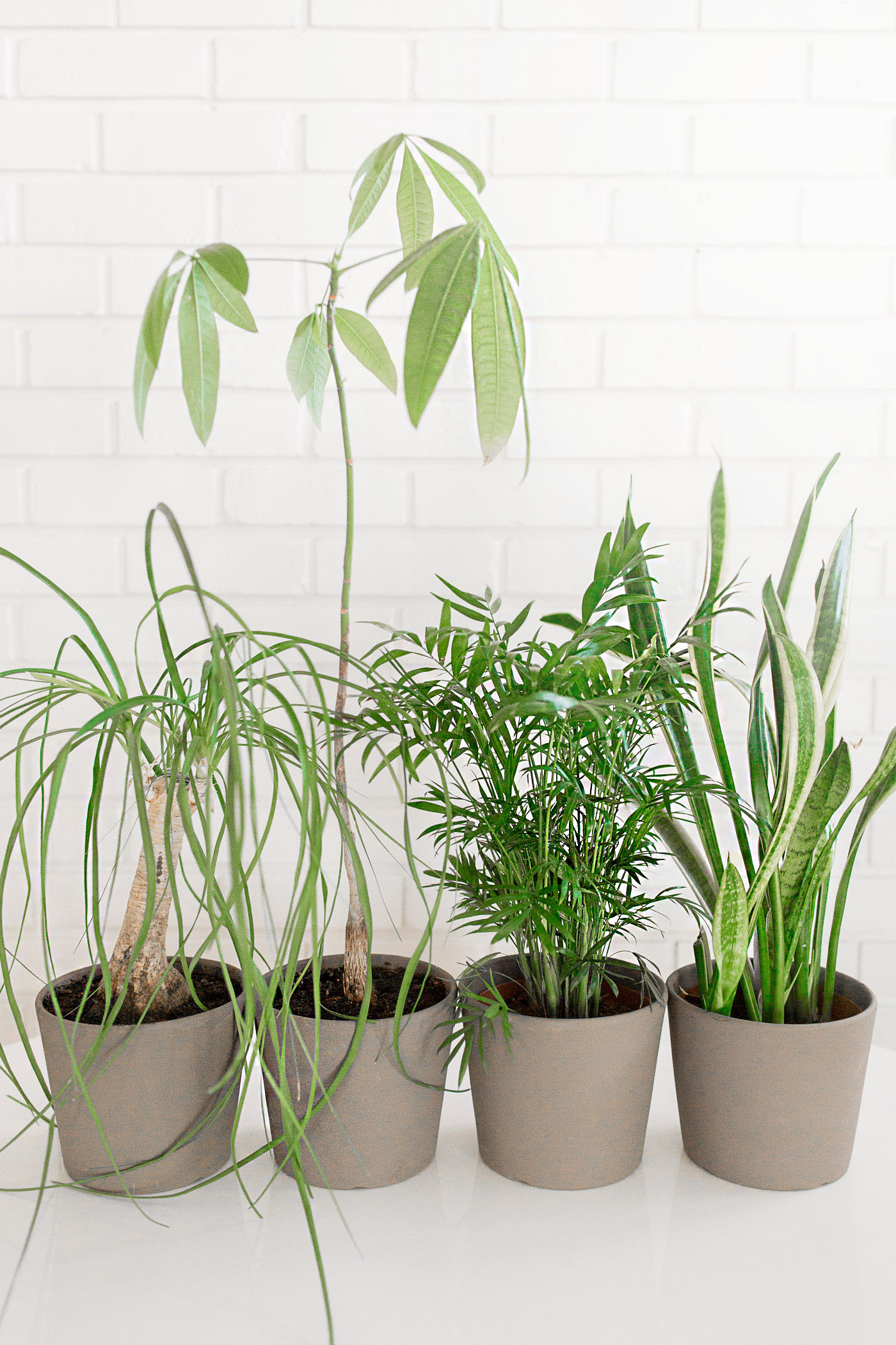 Easy Care Indoor Trees Easy To Care For Indoor Plants