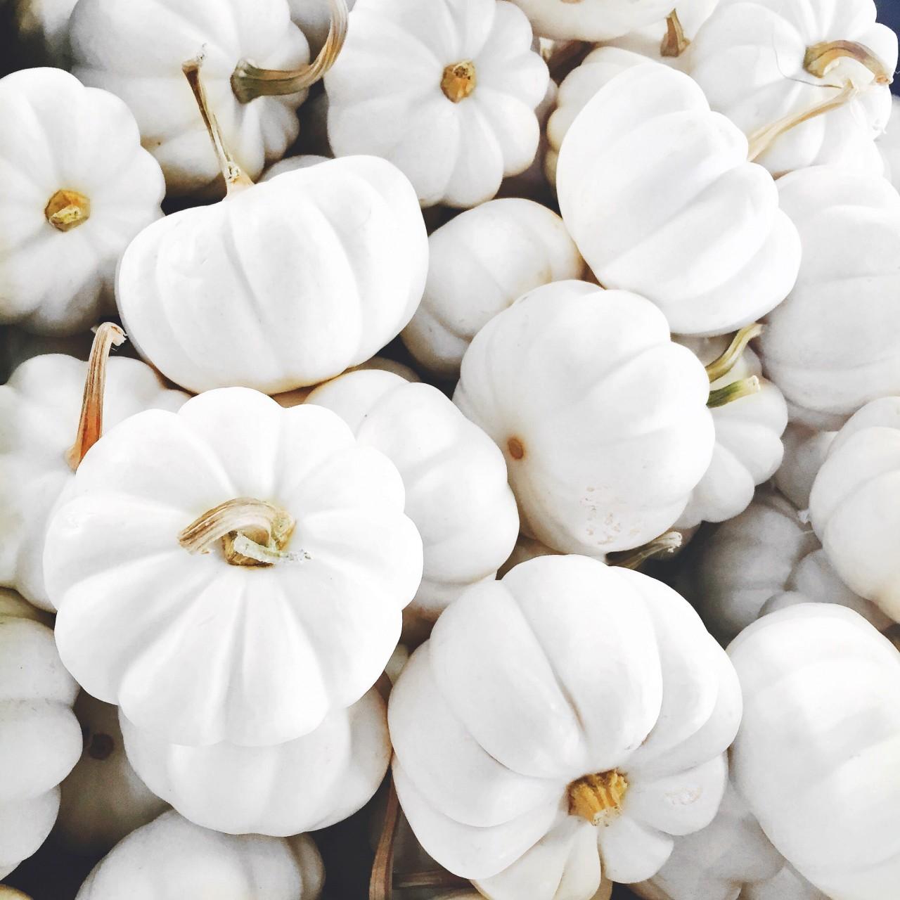 white_pumpkins_fall