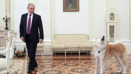 Russian President Vladimir Putin and his Akita-dog Yume before being interviewed by Nippon Television Network Corporation (Nippon TV) and Yomiuri Shimbun newspaper, in Moscow Russia. EPA, ALEXEI DRUZHININ, SPUTNIK, KREMLIN POOL
