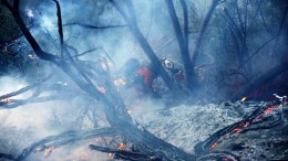 An inmate firefighter fights a fire in an avocado orchard at the Ojai Vista Farm threatened by the 'Thomas Fire' near Ojai, California, USA, 07 December 2017.  The fire has already burned more than 96,000 acres, destroyed over 150 structures and has forced more than 27,000 people to evacuate as one of the strongest Santa Ana winds forecast of the season is ongoing and expected to last several days.  EPA/MIKE NELSON