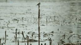 File Photo: Μεγάλες εκτάσεις και οι γύρω δρόμοι είχαν πλημμυρίσει πρόσφατα στο χωριό Βαλτινό . ΑΠΕ-ΜΠΕ, ΧΑΣΙΑΛΗΣ ΒΑΪΟΣ