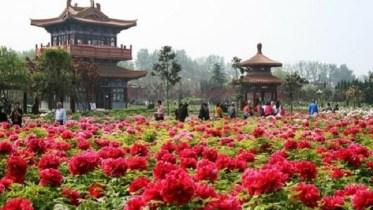 Οι ατέλειωτες εκτάσεις με αγριολούλουδα αποτελούν σημαντικό τουριστικό πόλο έλξης αλλά και πηγή εσόδων στην Τσιανγκσί. Photo @amna_news
