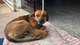 Ένας σκύλος περιμένει ακόμα στο νοσοκομείο τον ιδιοκτήτη του. Φωτογραφία via Facebook.
