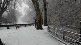 Χιονοθύελλα σάρωσε την Ανατολική ακτή των Ηνωμένων Πολιτειών την Τετάρτη 7 Μαρτίου. Το Central Park στην Νέα Υόρκη ντύθηκε στα λευκά. Φωτογραφία mignatiou.com