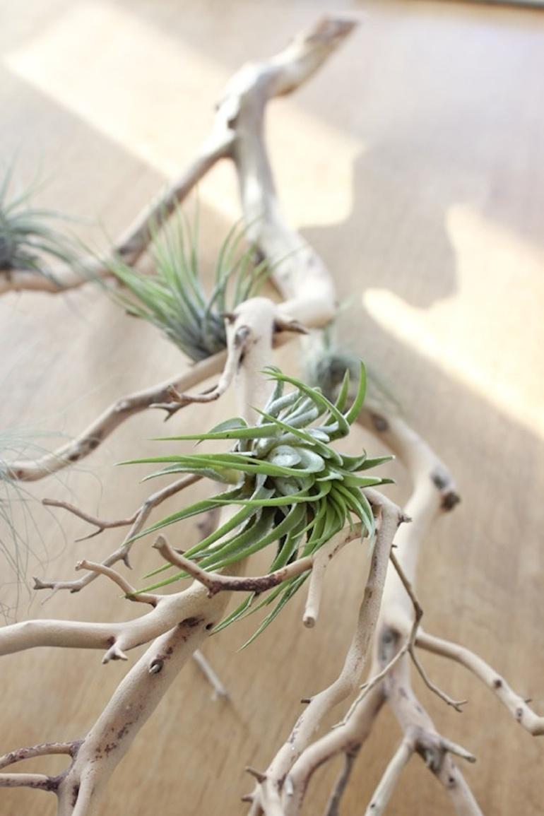 hello plante sans arrosage 2 h ll blogzine. Black Bedroom Furniture Sets. Home Design Ideas