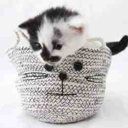 Calling All Cat Lovers! Cutest DIY Rope Basket Ever