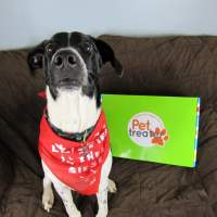 Pet Treater May 2016 Dog Subscription Box Review + Free Pet Bed Coupon
