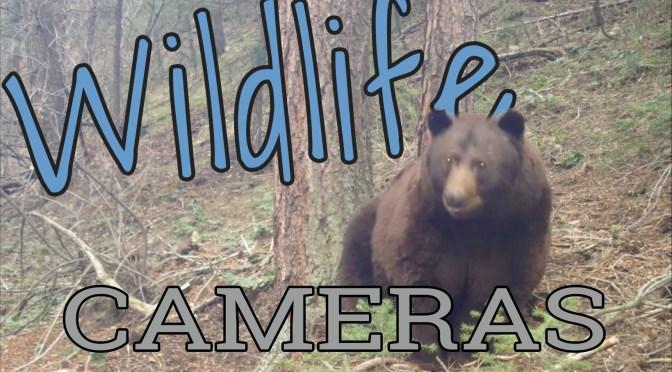 Boulder Wildlife Cameras