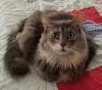 Cheena the Cat