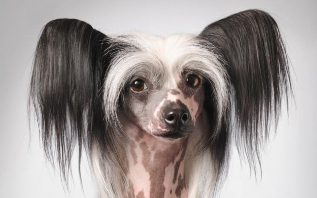 Cute Puppy Images Wallpaper Fluffy 5 Ugliest Dog Breeds Ever