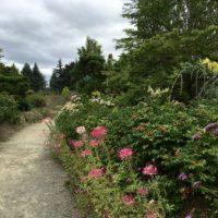 Kicking Back In Seattle's Lovely Kubota Garden