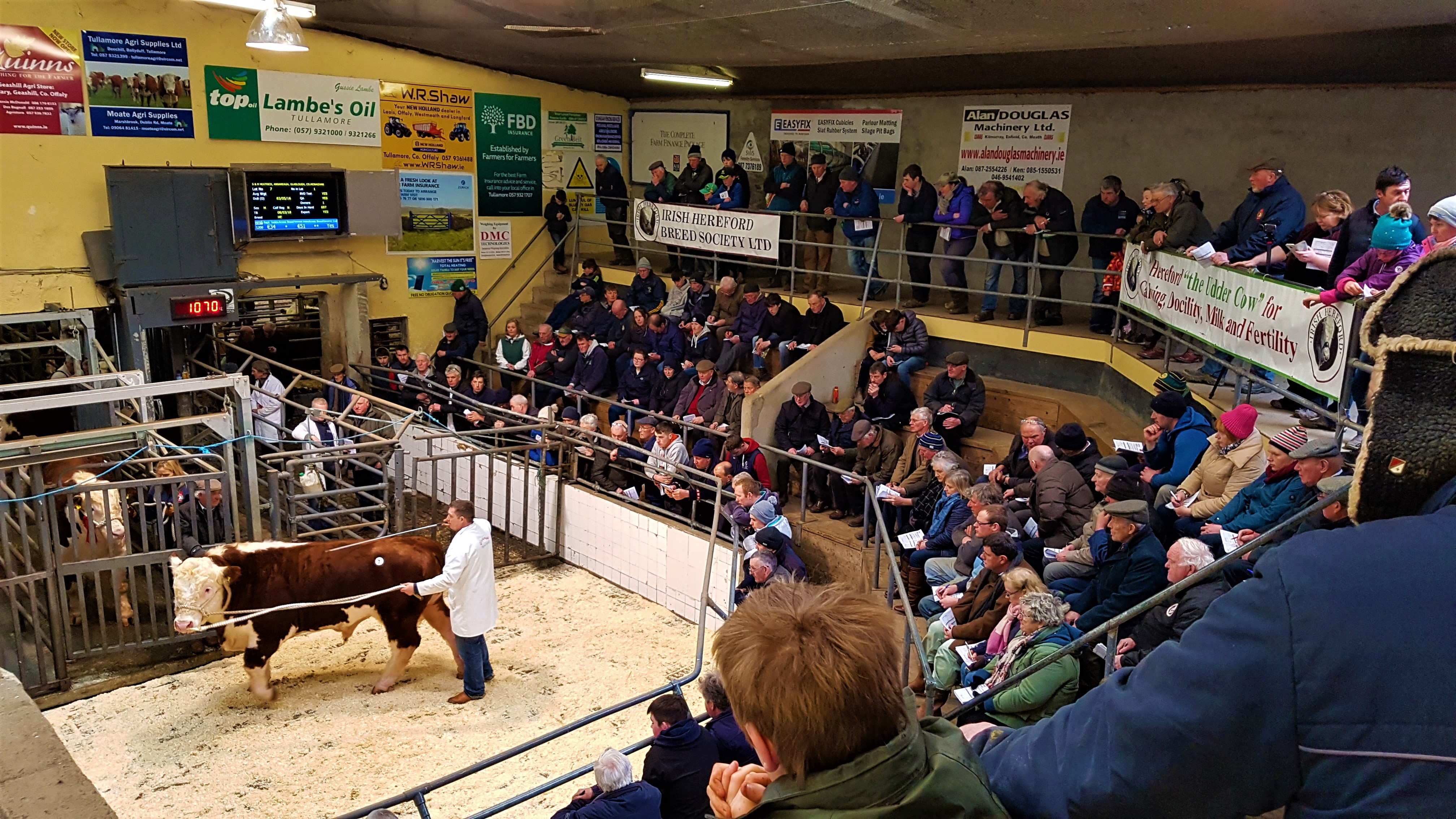 Prince Of Tullamore Secures 5 000 Irish Hereford Breed Society Ltd