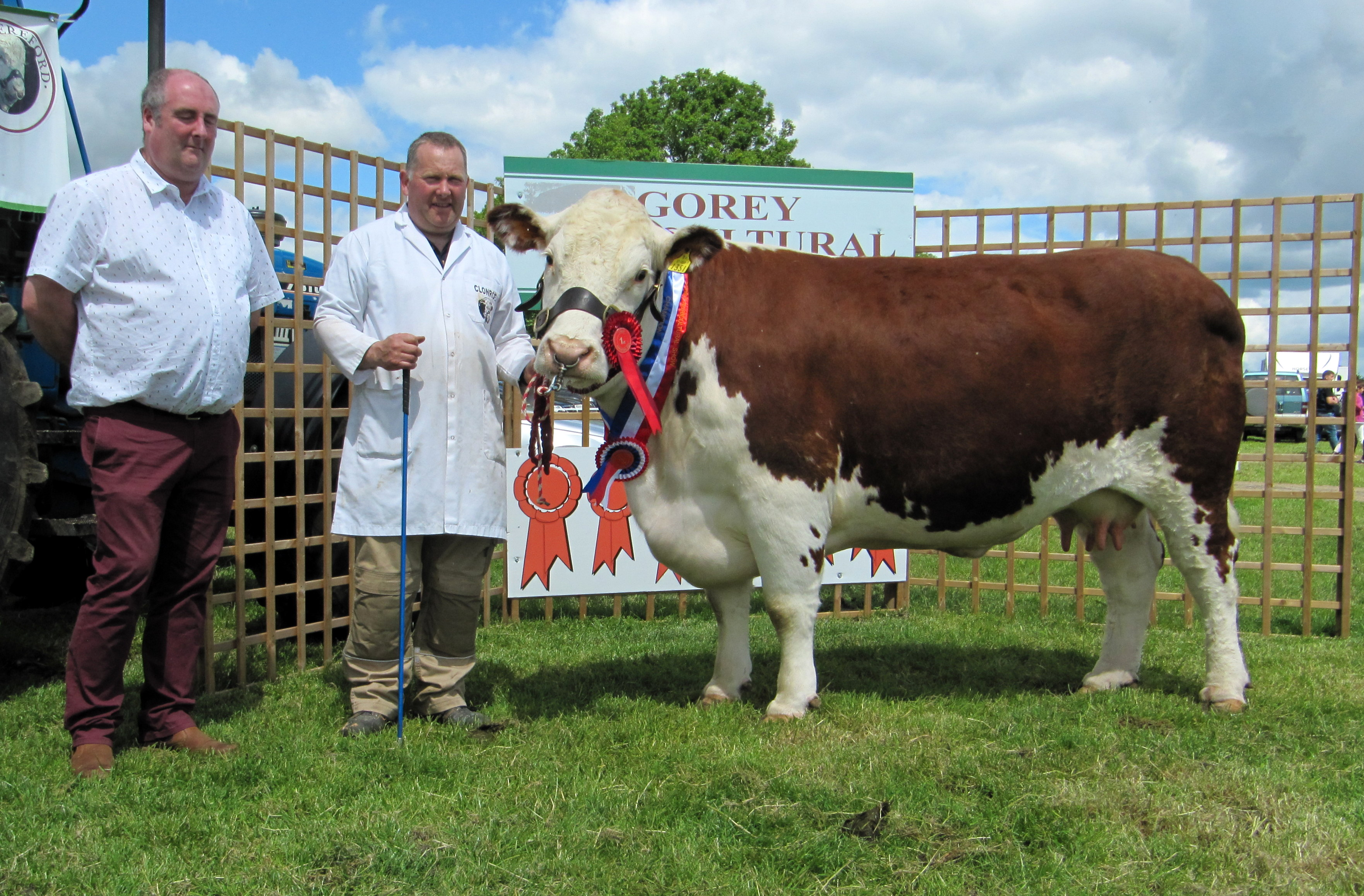 Gorey S 160th Annual Agricultural Show Irish Hereford Breed Society Ltd