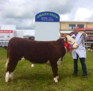 Horned Female of the year 2016 Corraback Blossom 3rd owned and Bred by Mervyn and Henry Richmond
