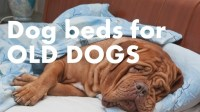 Best Dog Beds for Older Dogs (Keeping Your Companion Comfy)