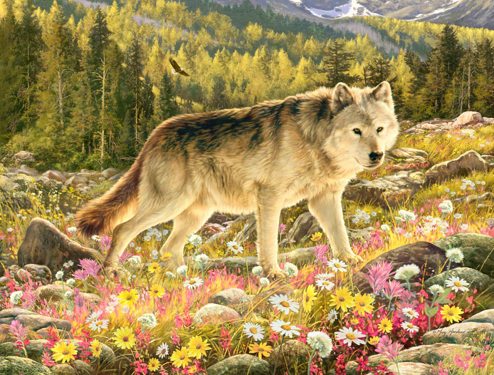 New England Fall Wallpaper Lone Wolf Puzzle Jigsaw Puzzles