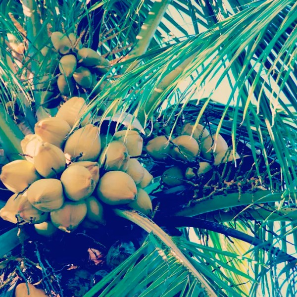 13 Reasons To Swear By Coconut Oil