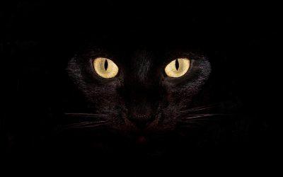 schwarze Katze böse | ***Neues aus der Hexenküche***